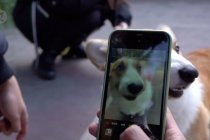 Uji coba teknologi pengenalan sidik hidung hewan peliharaan