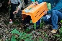 BKSDA lepas 6 ekor primata dilindungi
