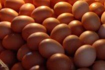 Dokter sarankan konsumsi telur sebagai sumber gizi lengkap dan murah