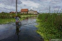 Kabupaten Pekalongan masih terendam banjir