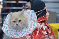 Kontes kucing di Banda Aceh