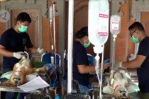 Upaya Denpasar tekan angka kasus rabies