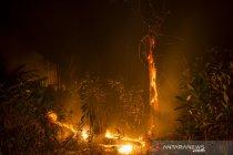 Kebakaran hutan dan lahan di Pekanbaru