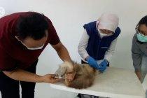 Pemkot Tangerang vaksinasi rabies 50 hewan peliharaan