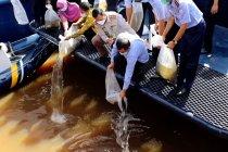 KKP selamatkan ikan endemik asli Kalimantan dari ancaman kepunahan