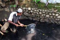Ikan mati mendadak, diduga akibat sungai tercemar limbah