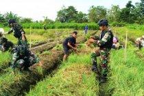 Satgas TNI bantu warga panen bawang merah di perbatasan RI-PNG