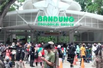 Kebun Binatang Bandung padat, 2 pengunjung positif COVID-19
