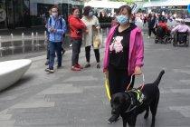 Anjing penuntun kian digemari para penyandang tunanetra di China