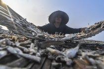 KKP: Pengembangan inovasi kampung ikan tingkatkan kesejahteraan masyarakat