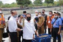 Ini jurus pemerintah bangkitkan tambak udang di Lampung