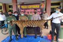 Polisi memburu dua pelaku sindikat perdagangan harimau di Bengkulu