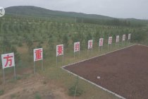 Mongolia Dalam catat kemajuan pesat dalam upaya pengendalian desertifikasi