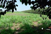 Mesir targetkan peningkatan produksi pertanian 30 persen pada 2024