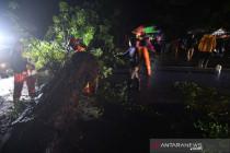 Pohon tumbang akibat hujan dan angin kencang di Palu