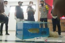 Polres Bogor mengungkap kasus pencurian ikan seharga Rp24 miliar