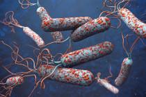 Kolera tewaskan 526 orang di Nigeria tahun ini