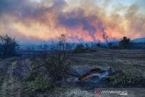 Kebakaran hutan di Turki, tidak ada WNI jadi korban
