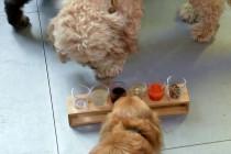 Bar London menyajikan puptails untuk anjing