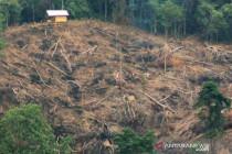 Anggota DPRD Kabupaten Soppeng ditetapkan tersangka pembalakan hutan