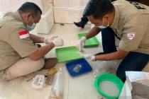 TNI AL gagalkan penyelundupan benur bernilai miliaran rupiah