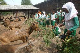 Pengelola bantah telantarkan satwa kebun binatang