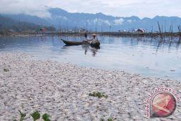Bau tak sedap merebak di Danau Maninjau