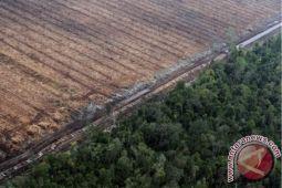 Perusak hutan Gunung Lemongan divonis 8 tahun