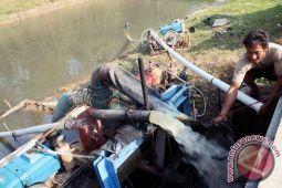 16 hektare sawah Karawang gagal panen akibat virus rumput