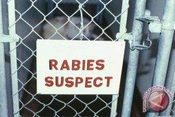 1.068 Kasus Gigitan Rabies di Kalbar