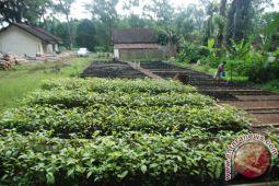 Bupati Purbalingga ajak masyarakat menanam pohon