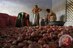 Mentan: keuntungan importir bombai mini Rp1,24 triliun