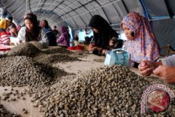 Eksportir keluhkan kopi Gayo ditolak buyer Eropa