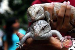 Tiga spesies reptil di Pulau Natal dinyatakan punah