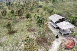 BNPB sediakan 10.000 bibit pohon tahan api