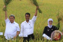 Mentan isyaratkan kenaikan HPP beras