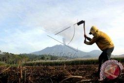 13 pendaki terjebak kebakaran di Gunung Raung, tujuh warga asing