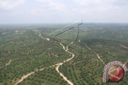 8.000 hektare lahan di Aceh Tamiang beralih fungsi tanaman sawit