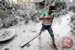 Petani Aceh Tenggara perbaiki tanaman tertutup abu