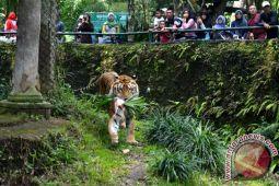 TSI Cisarua menyajikan berbagai atraksi hewan
