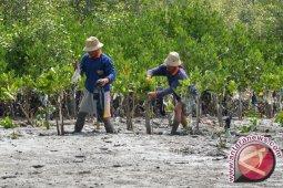 Pemkab Pohuwato Minta Polisi Tindaki Perusak Mangrove