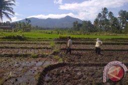 Padangsidimpuan Siap Sukseskan Swasembada Pangan