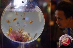 Thailand makin minati ikan hias Sulut