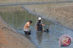 KMMD : Cagar Alam Tanjung Panjang Harus Dipertahankan