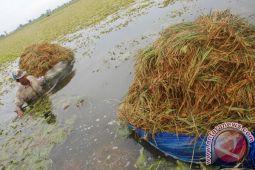 Puluhan hektare sawah di Bondowoso terendam banjir