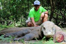 Ada usulan membuat kartu tahunan masuk Taman Nasional Komodo