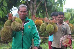 Ilmuwan ungkap asal bau tajam durian