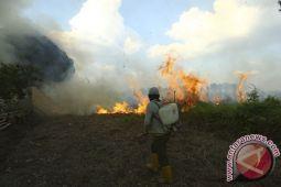 Dua hektare tanaman cabai di Hulu Sungai Selatan ikut terbakar