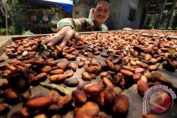 Lemak kakao dapat melembutkan dan menutrisi kulit