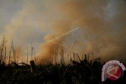 Kebun jati terbakar di Aceh Tenggara